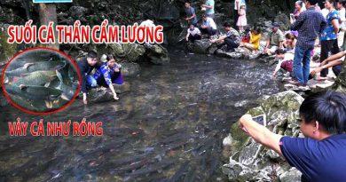 suoi ca than tham luong